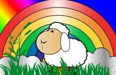 Sheep and rainbow