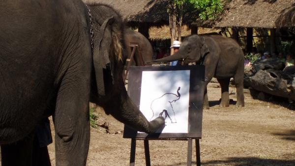 Elephant painting in Thailand