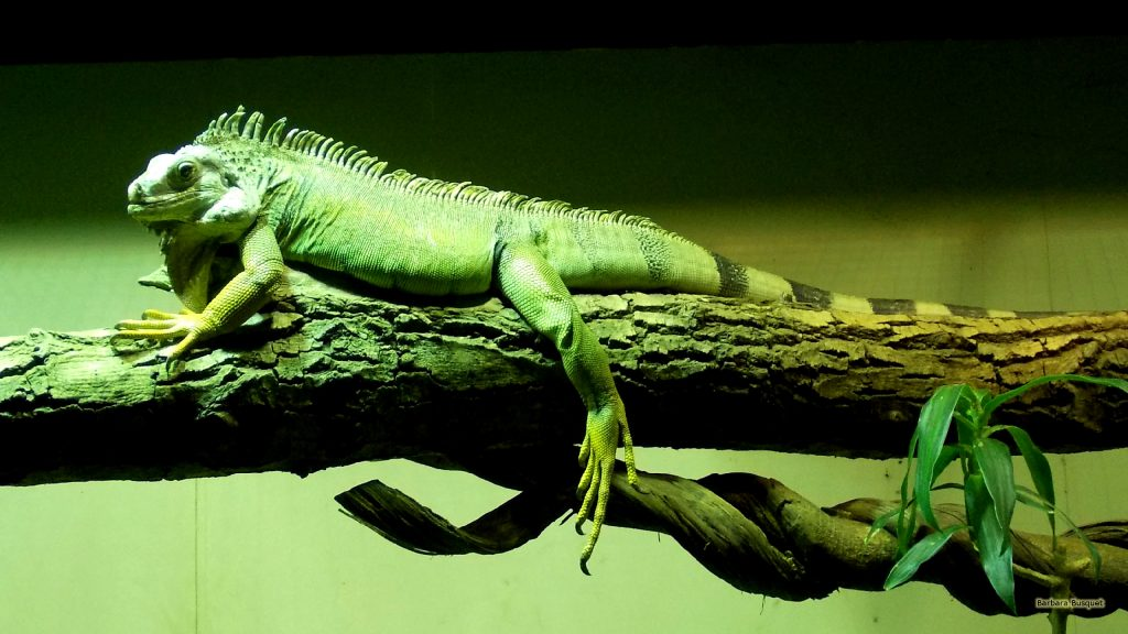 HD wallpaper chinese water dragon on branch