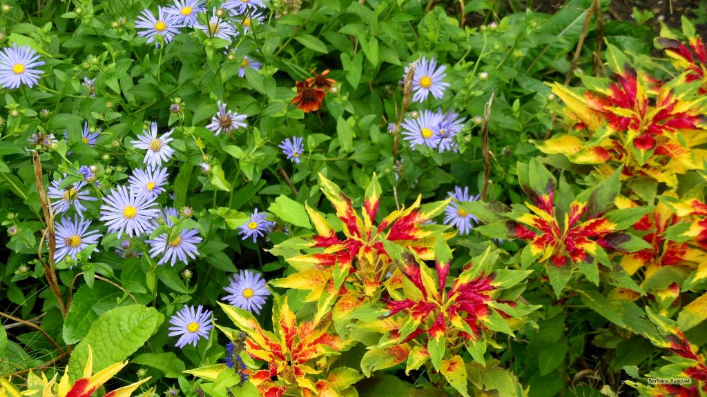 Plants and purple flowers