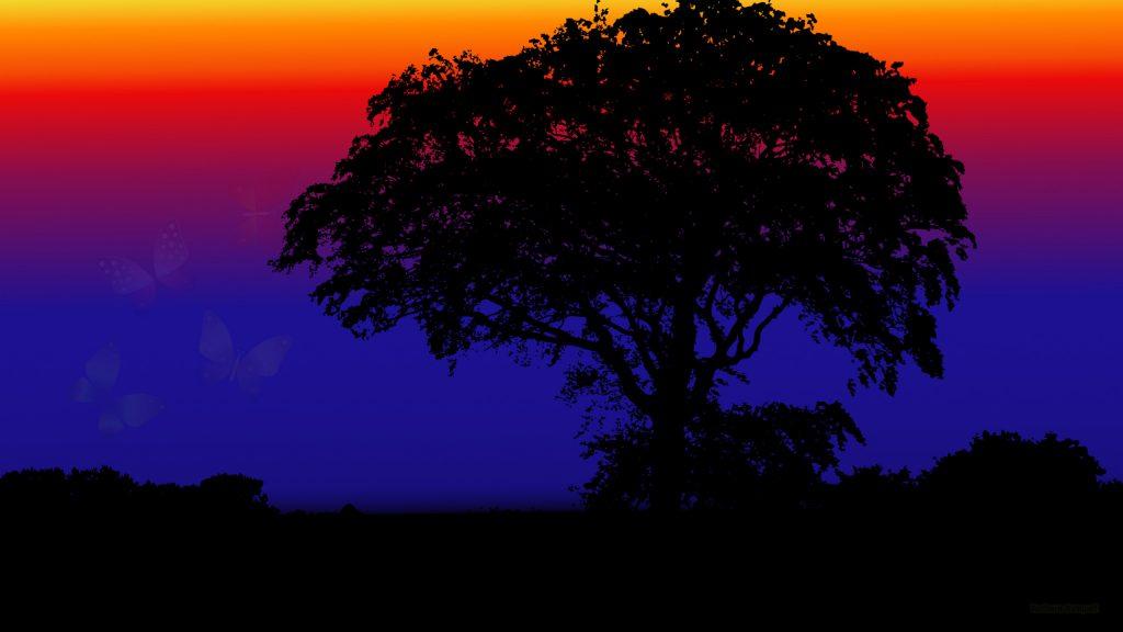 HD wallpaper tree by night