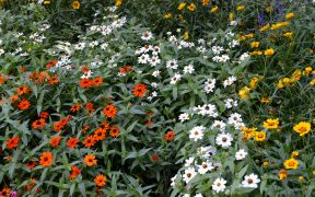 Flower field wallpaper sea of flowers
