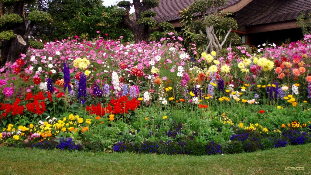Flower garden in Thailand