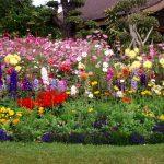 Flower garden Thailand