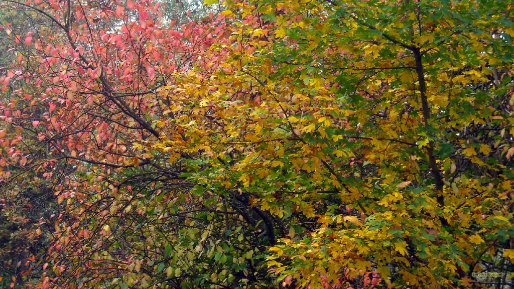 Fall wallpaper colored trees