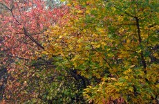 Fall wallpaper colored leaves