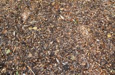 Brown woodchips wallpaper