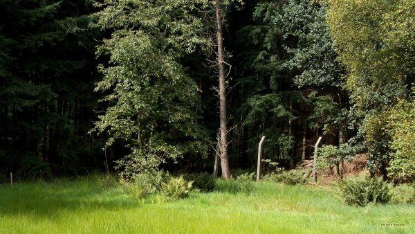 Open spot in forest
