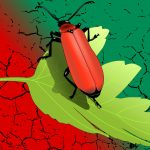 Red green HD wallpaper beetle