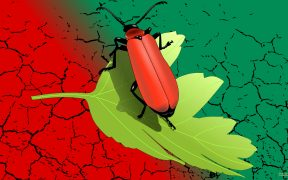 Red green HD wallpaper beetle