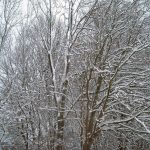 Winter wallpaper trees with snow