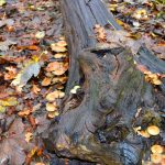 Autumn wallpaper tree trunk