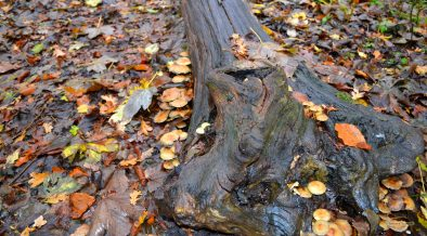 Fall wallpaper tree trunk in forest