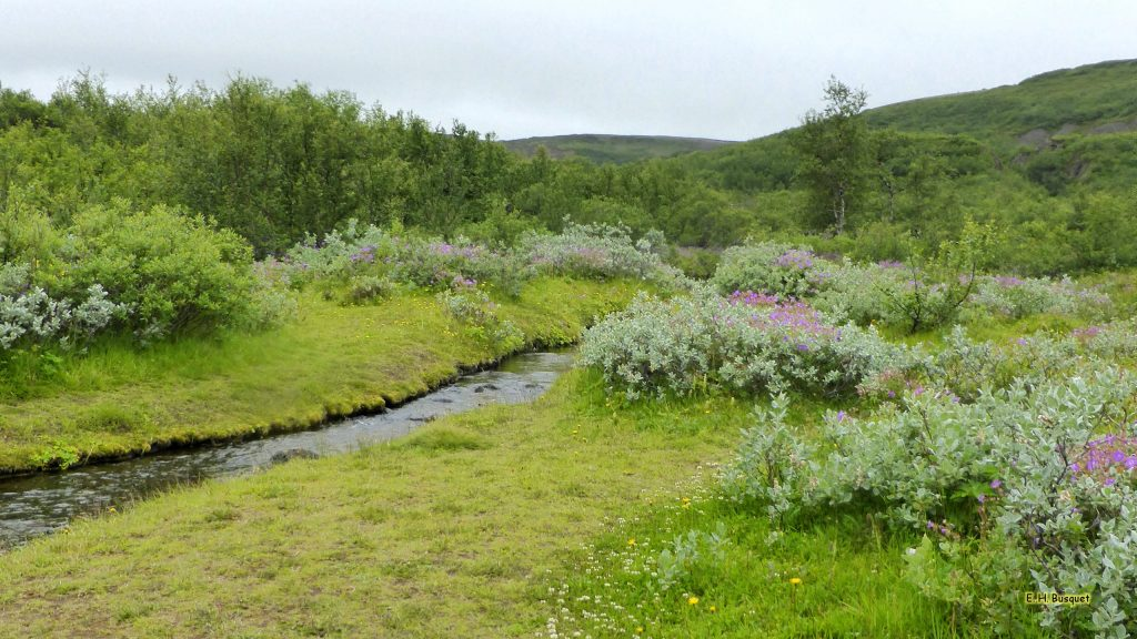 Green landscape with river in Iceland