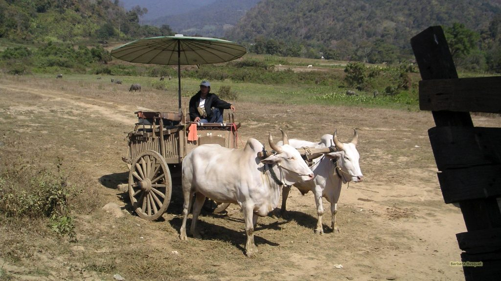 Bullock cart in Thailand