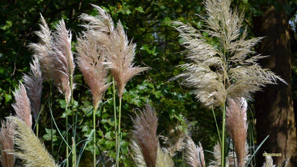 HD wallpaper pampas grass