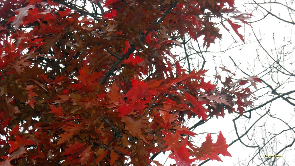 HD wallpaper red leaves in fall