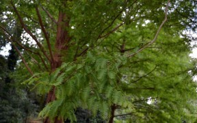 HD wallpaper green tree in summer