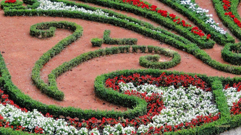 HD wallpaper flowers in park
