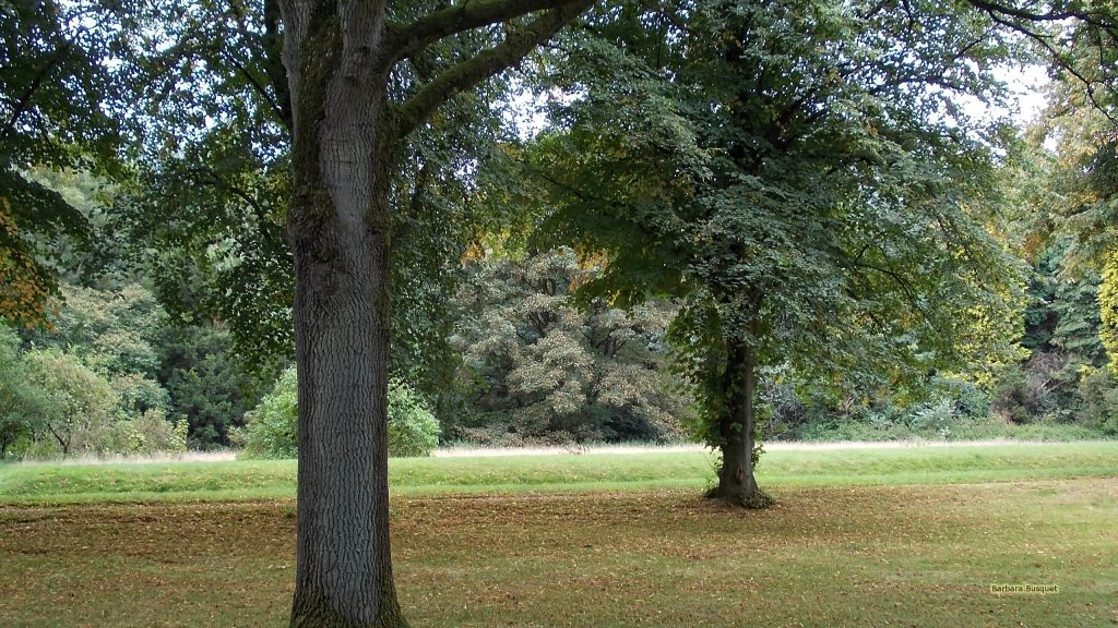 Trees in park wallpaper