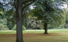 Trees in park wallpaper