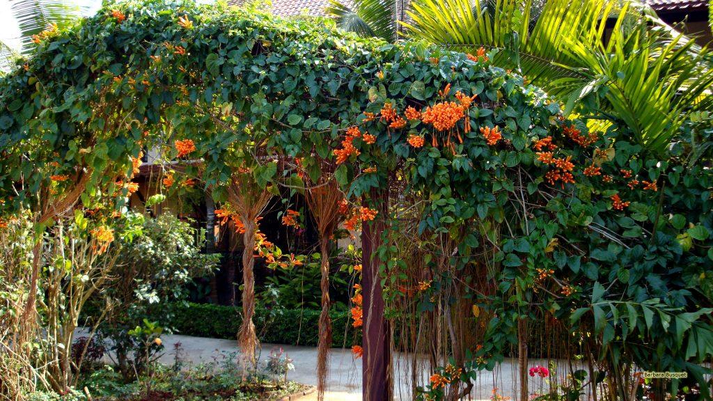 HD wallpaper orange trumpet or flame flower