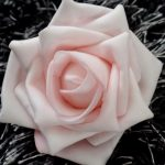 Pink Rose close-up Wallpaper