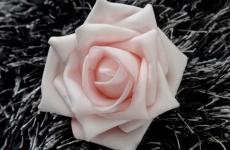 Pink Rose close-up Wallpaper